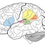 Kako delujejo možgani?