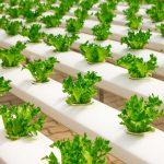 Gojenje rastlin na moderen način